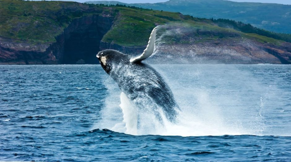 Whales, seabirds, and icebergs: Newfoundland and Labrador