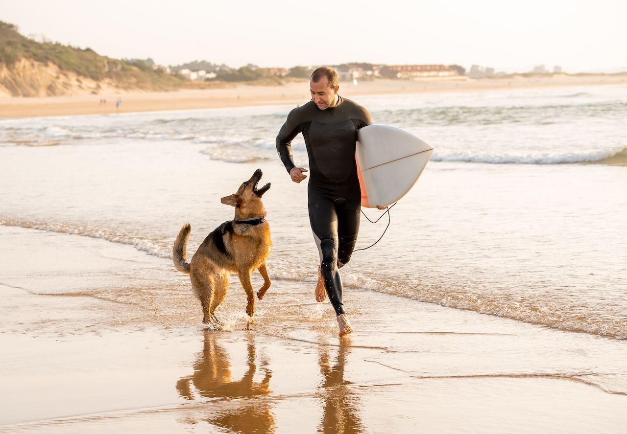 Dog with person surfing