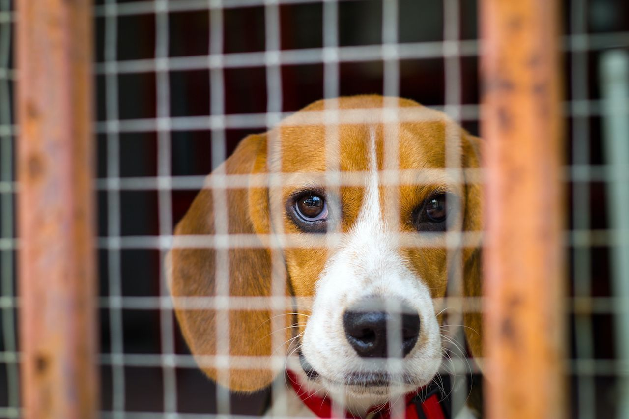 FDA allows lab animals to be adopted