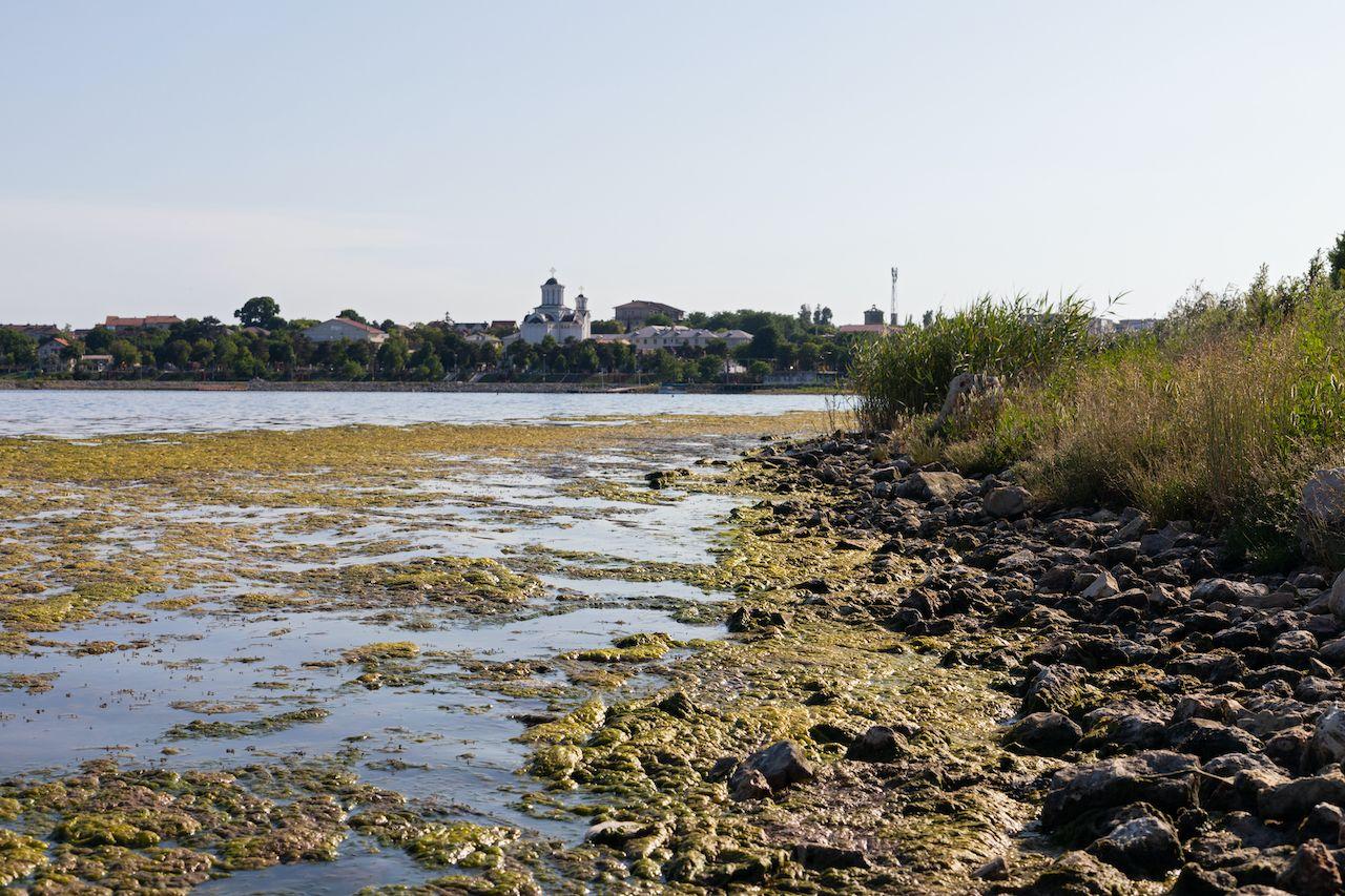 Lake full of seaweed