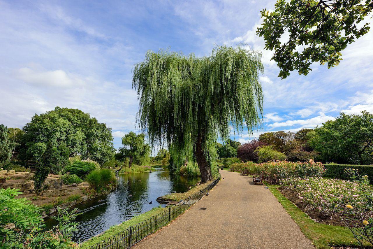 Queen Mary's Rose Gardens in Regent's Park