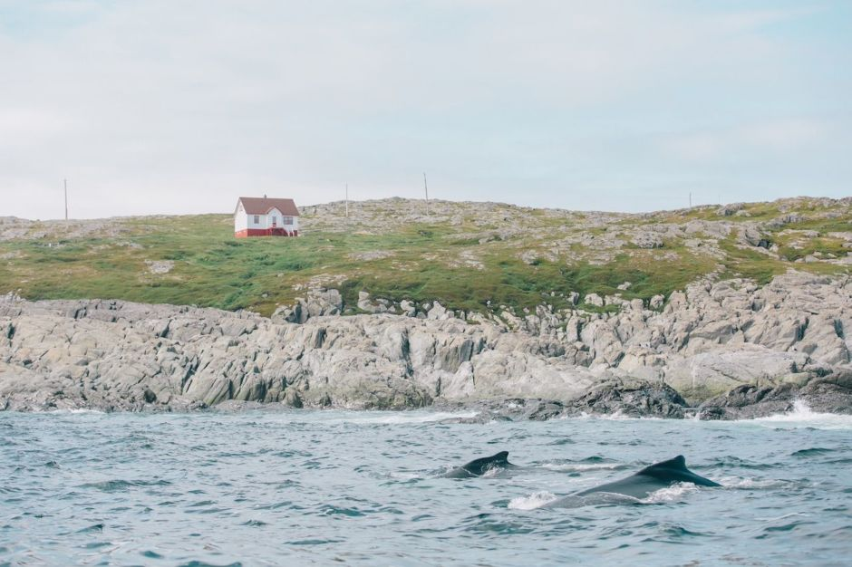 7 incredible experiences you can only have in Newfoundland and Labrador