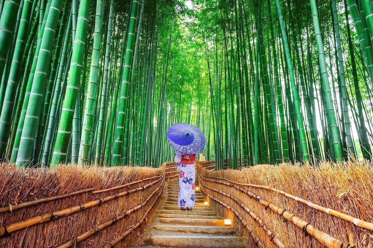 World s most instagrammed forests