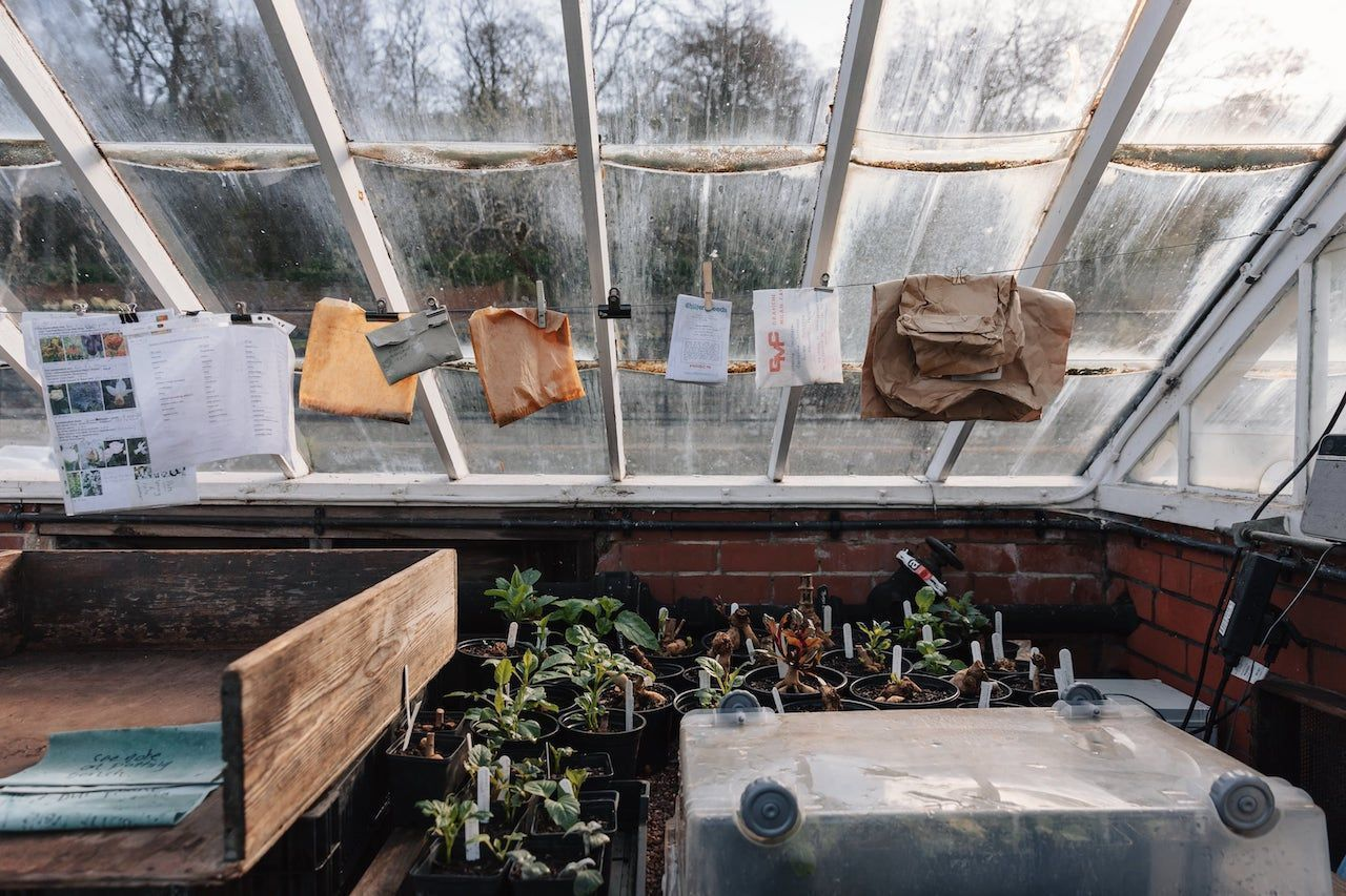 greenhouse-chatsworth-house