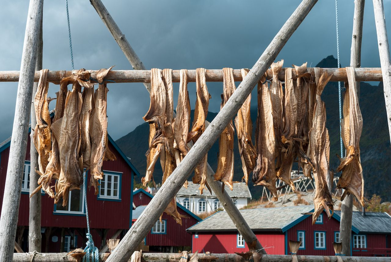 Cod drying in rack in Reine, Lofoten