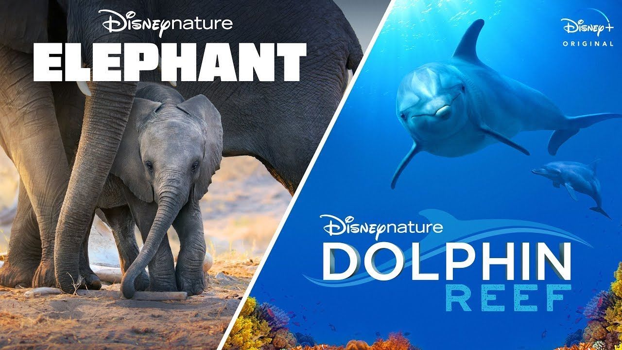 Journey with elephants and dolphins via your TV set.. The post Disney+ is releasing two new Disneynature films for Earth Month appeared first on Matador Network..