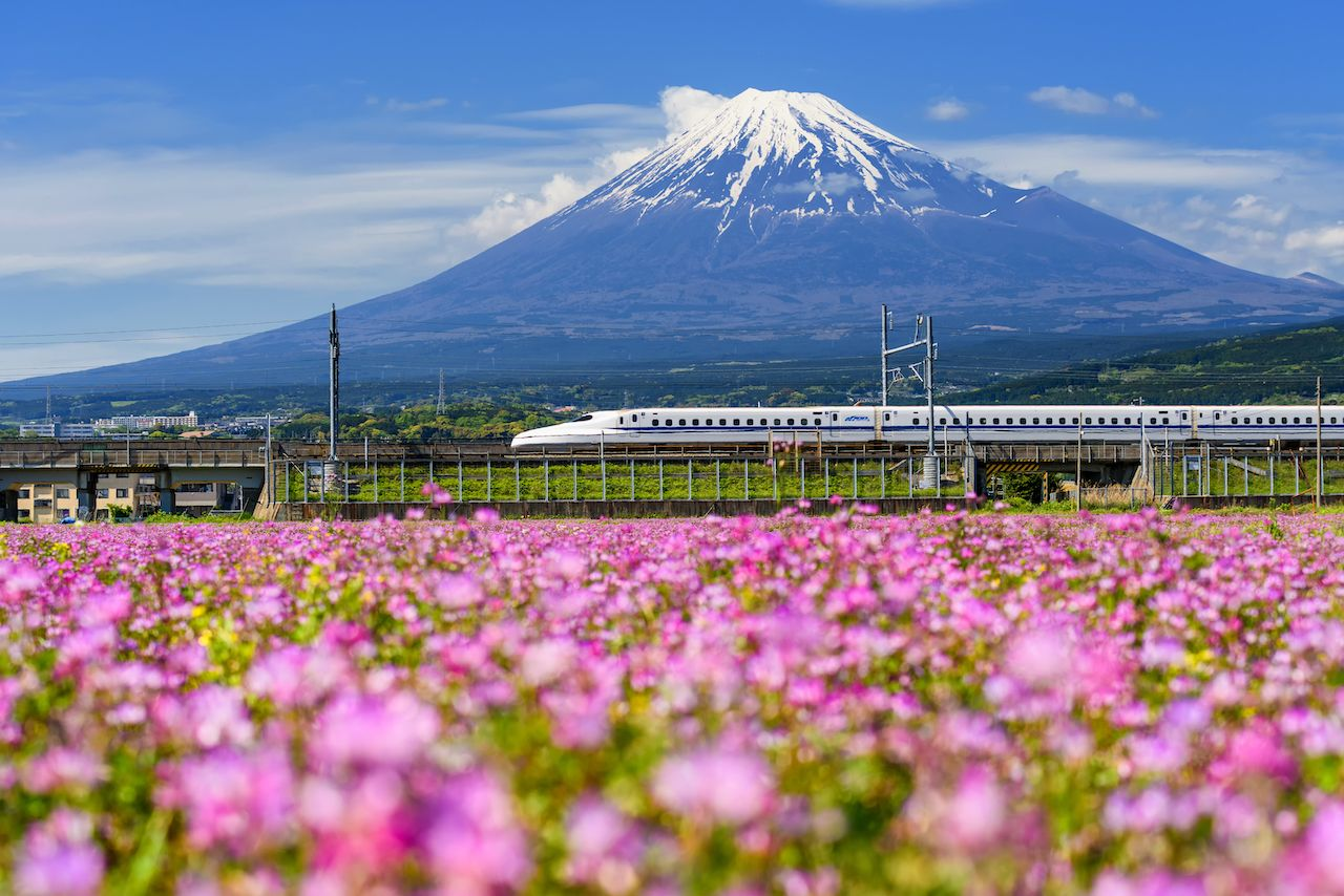 JR Bullet train running pass through Mt Fuji and Shibazakura