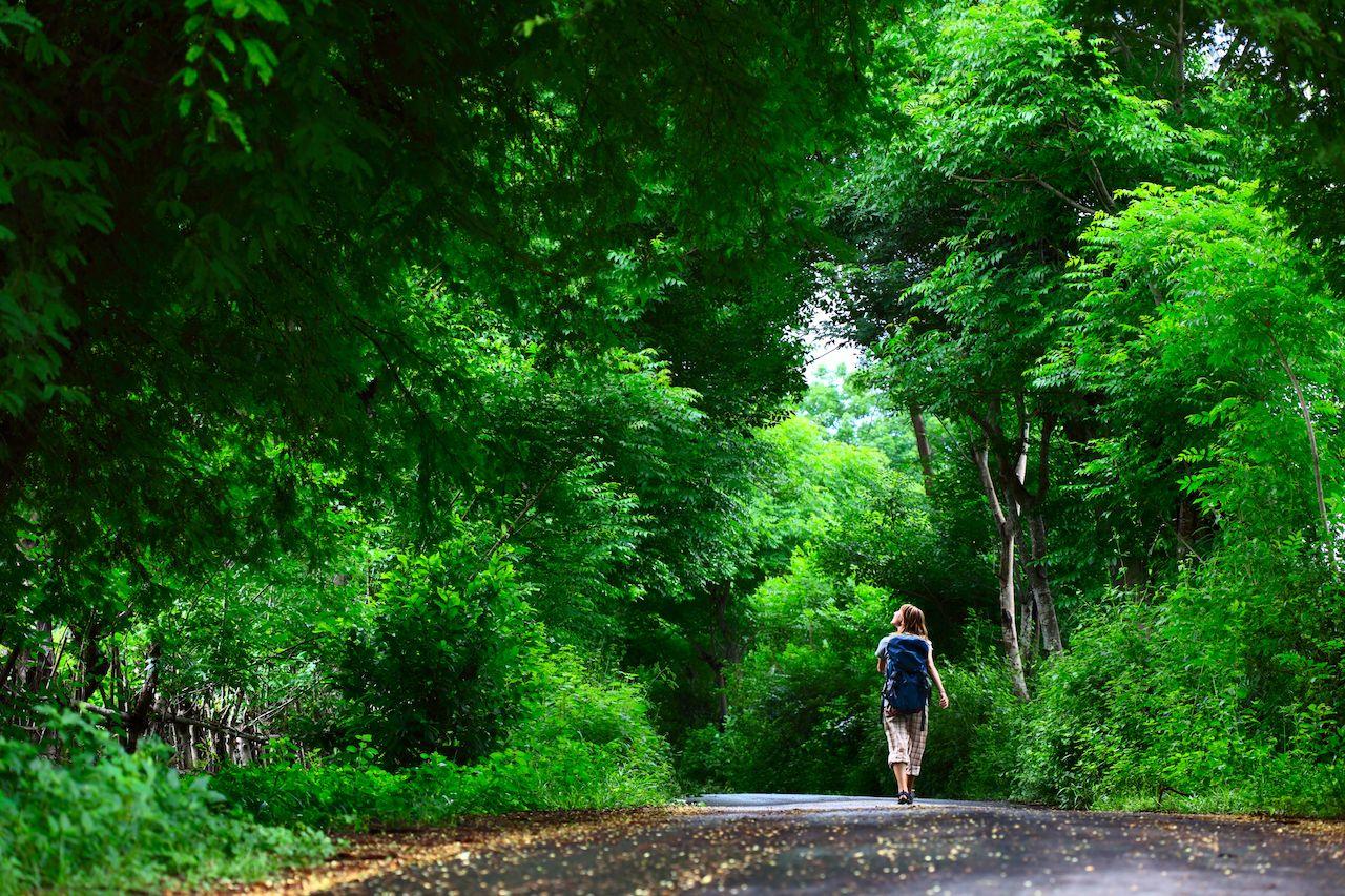 Person walking on green asphalt road in forest