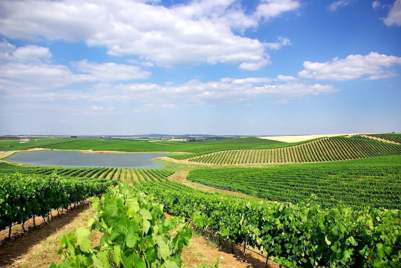 Sustainable wine, Alentejo, Portugal