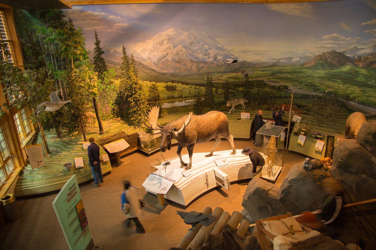 full sized mounted moose