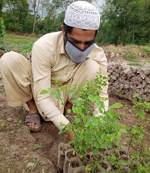 Man caring for a sapling in Pakistan as part of the country's green stimulus