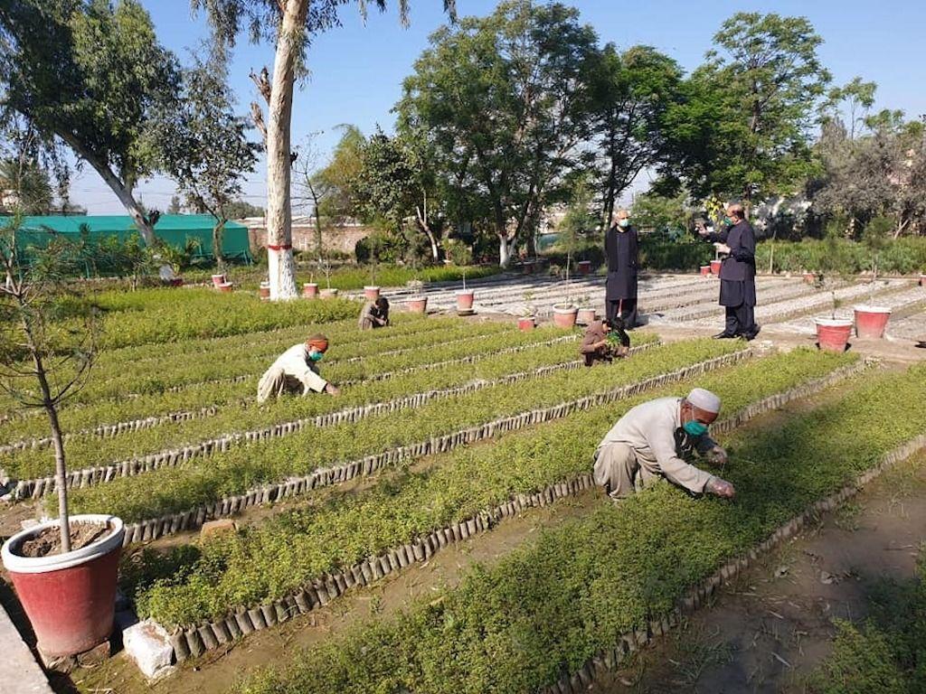 Pakistan pays to plant trees