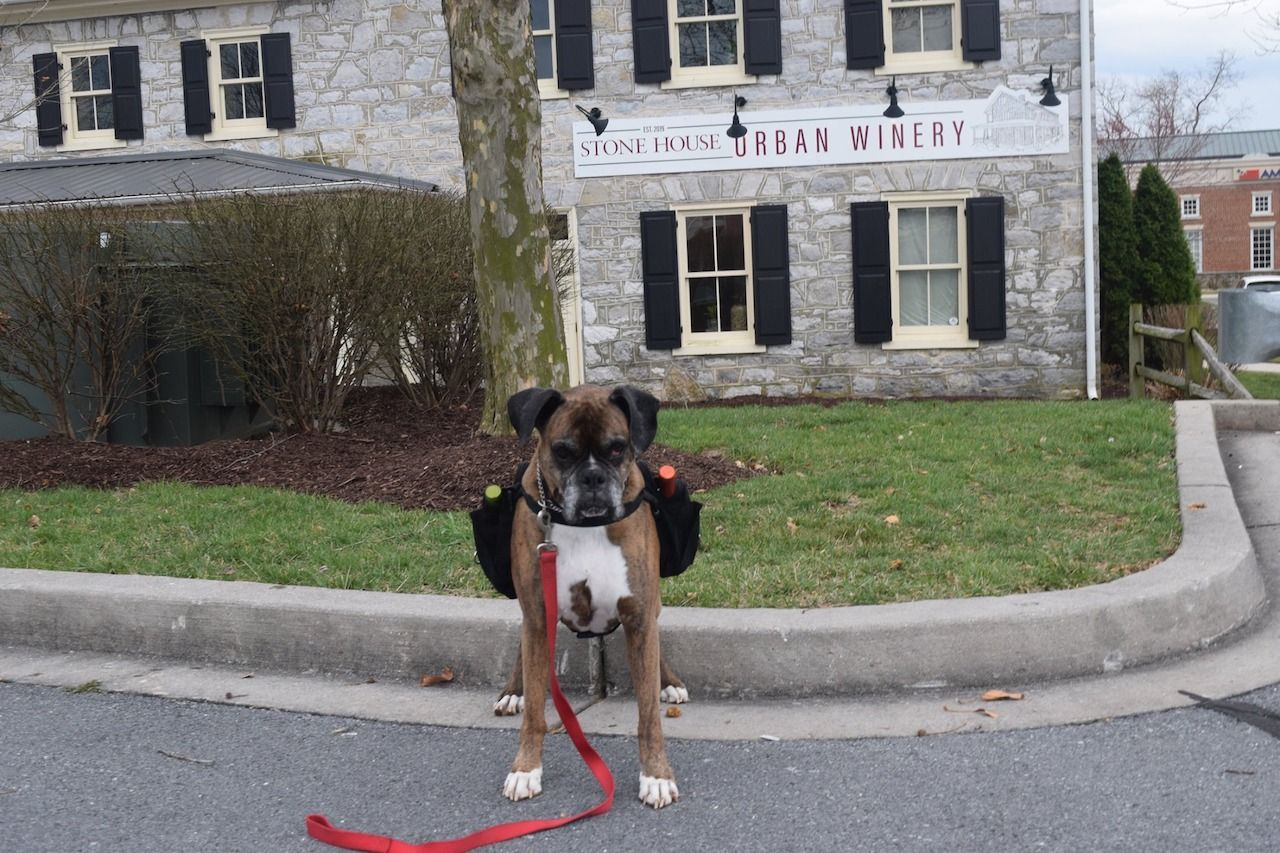 Winery dog delivery in Maryland