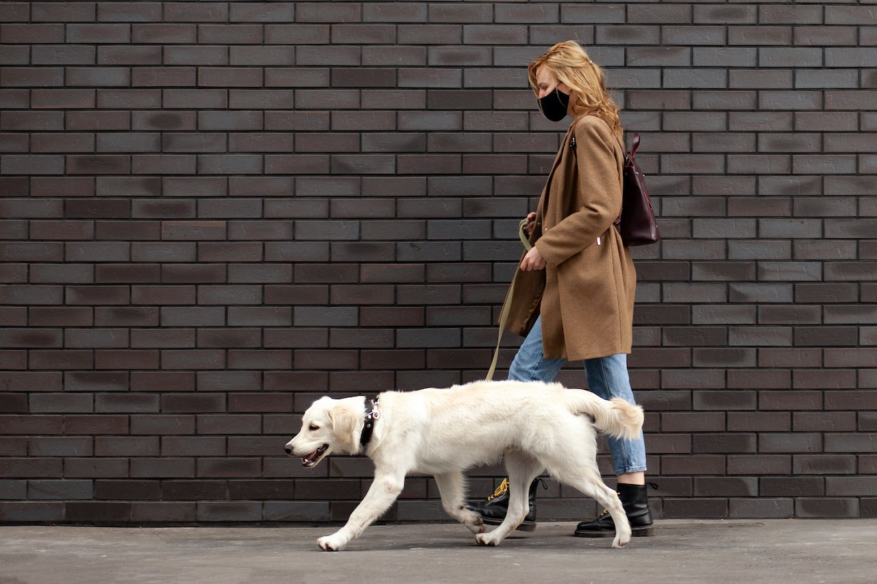 Pets social distancing guidelines