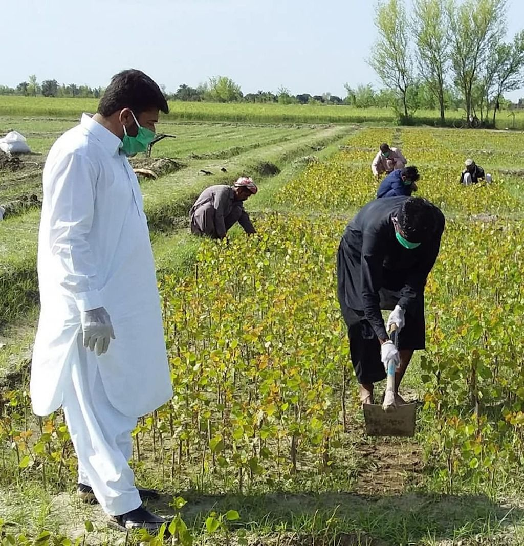 Worker planting trees in pakistan
