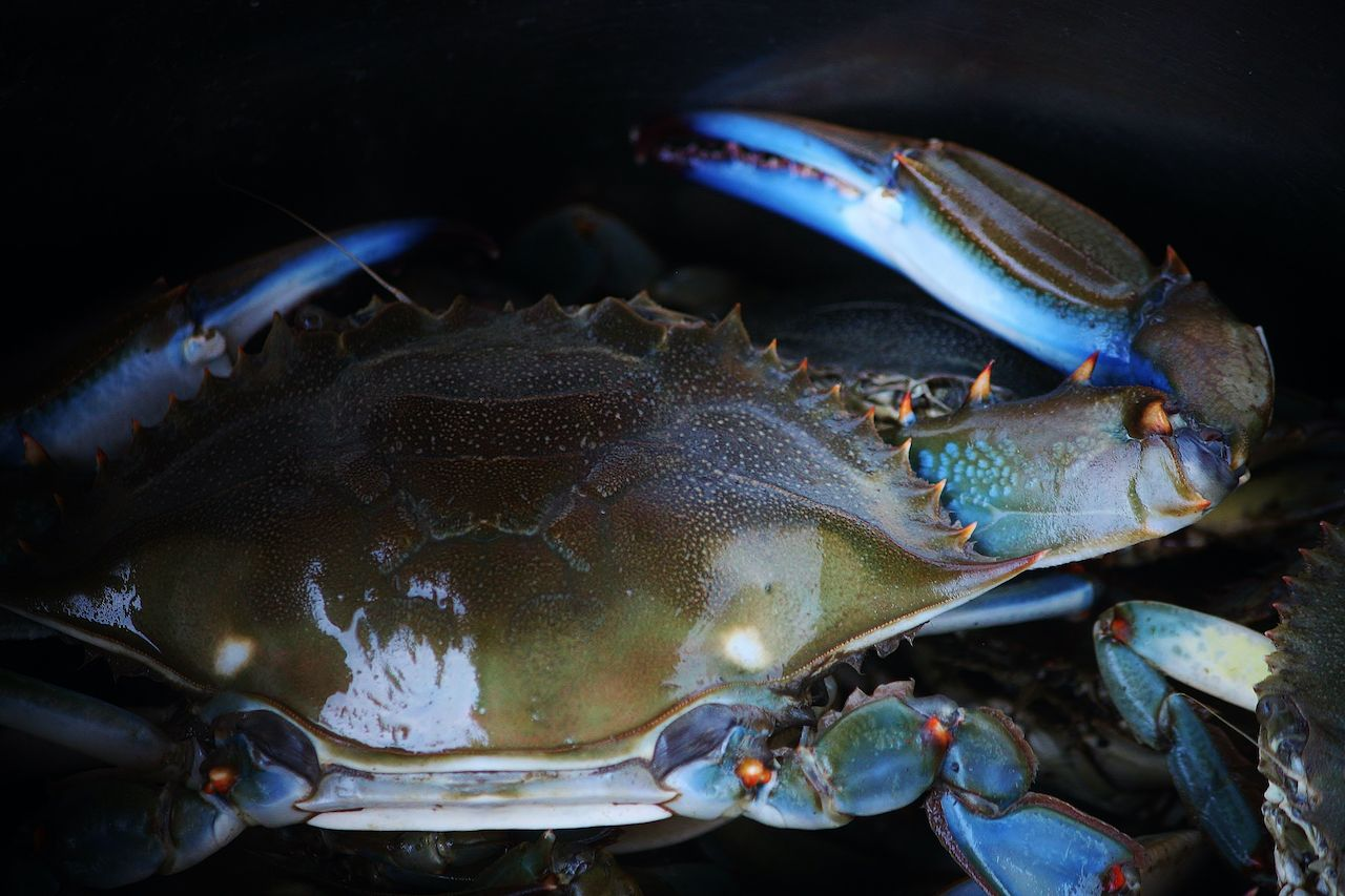 carolina-lowcountry-blue-crab-importance-culture