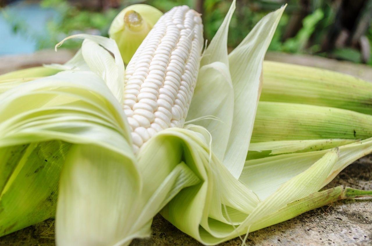 Iroquois White Corn Project