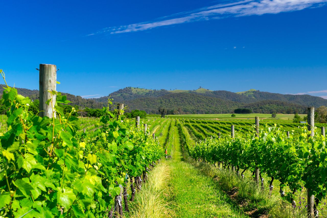 Wineries on Prosecco Road, Australia