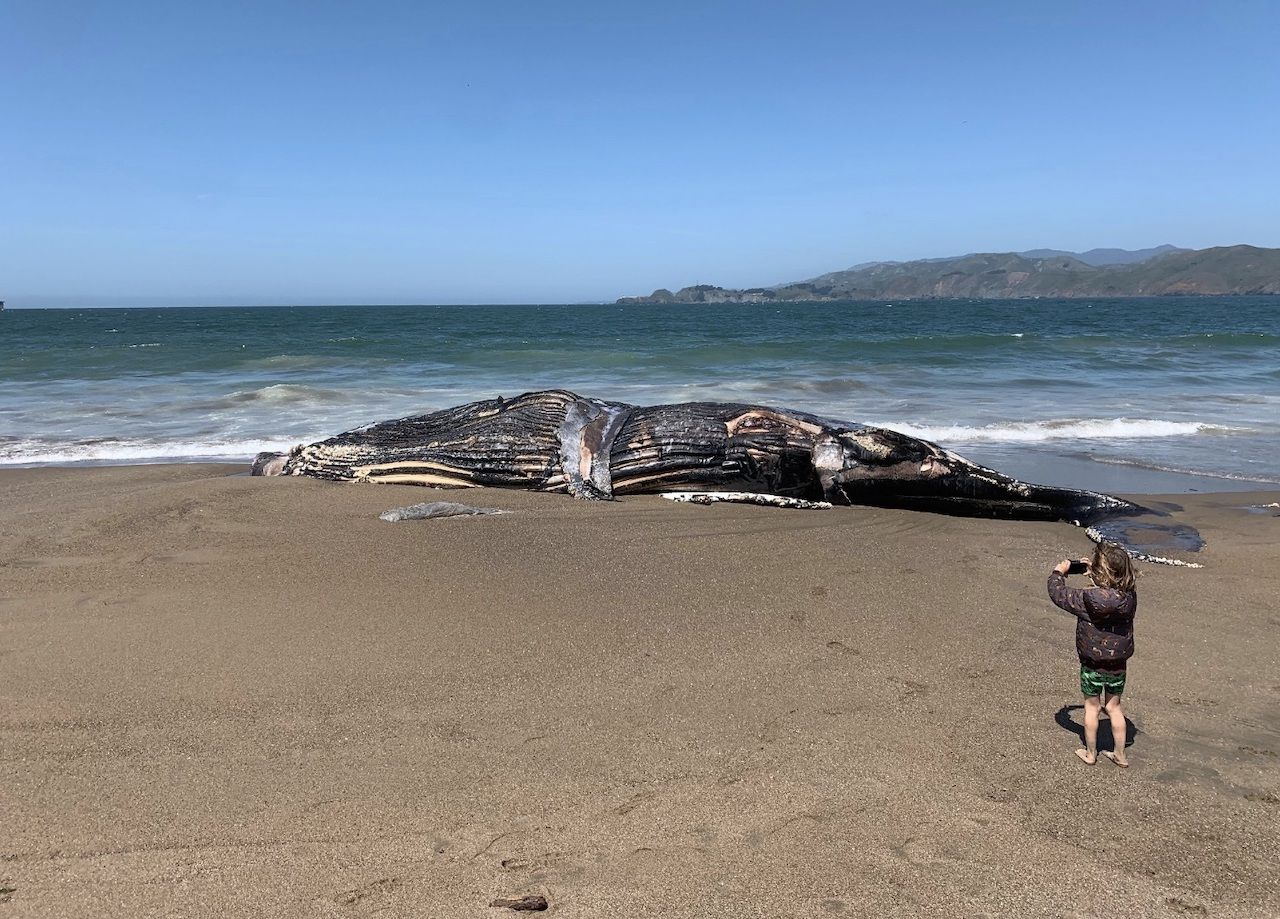 whale on San Francisco beach