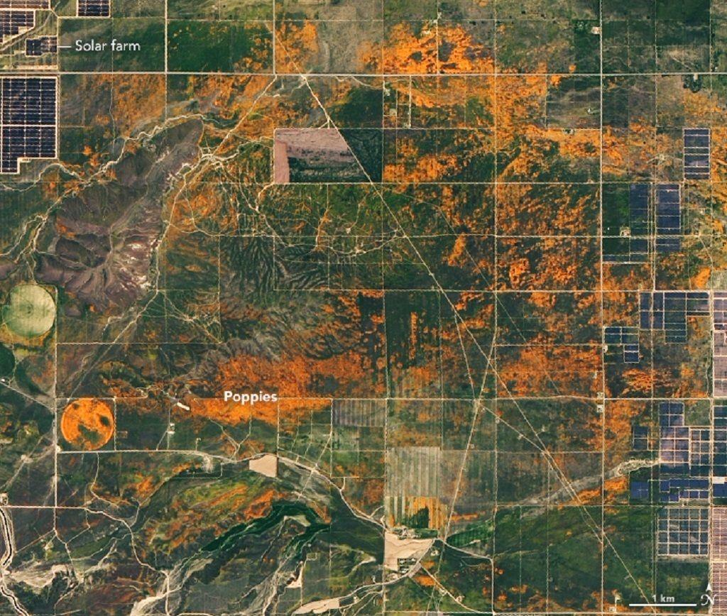 NASA captured California s poppies