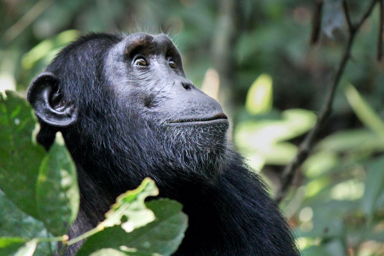 Jane Goodall itinerary Gombe Stream