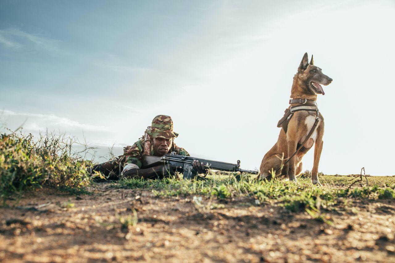 Dogs saving rhinos