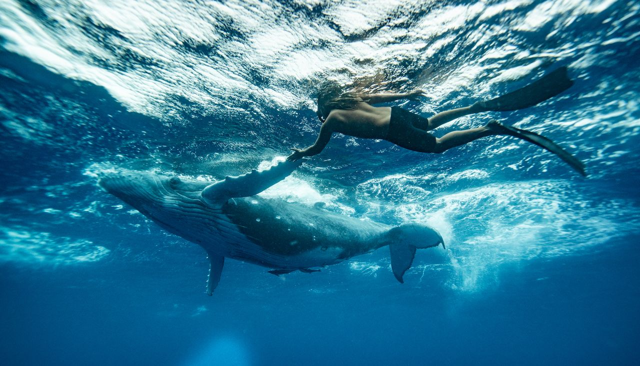 Is swimming with whales in Tonga OK?
