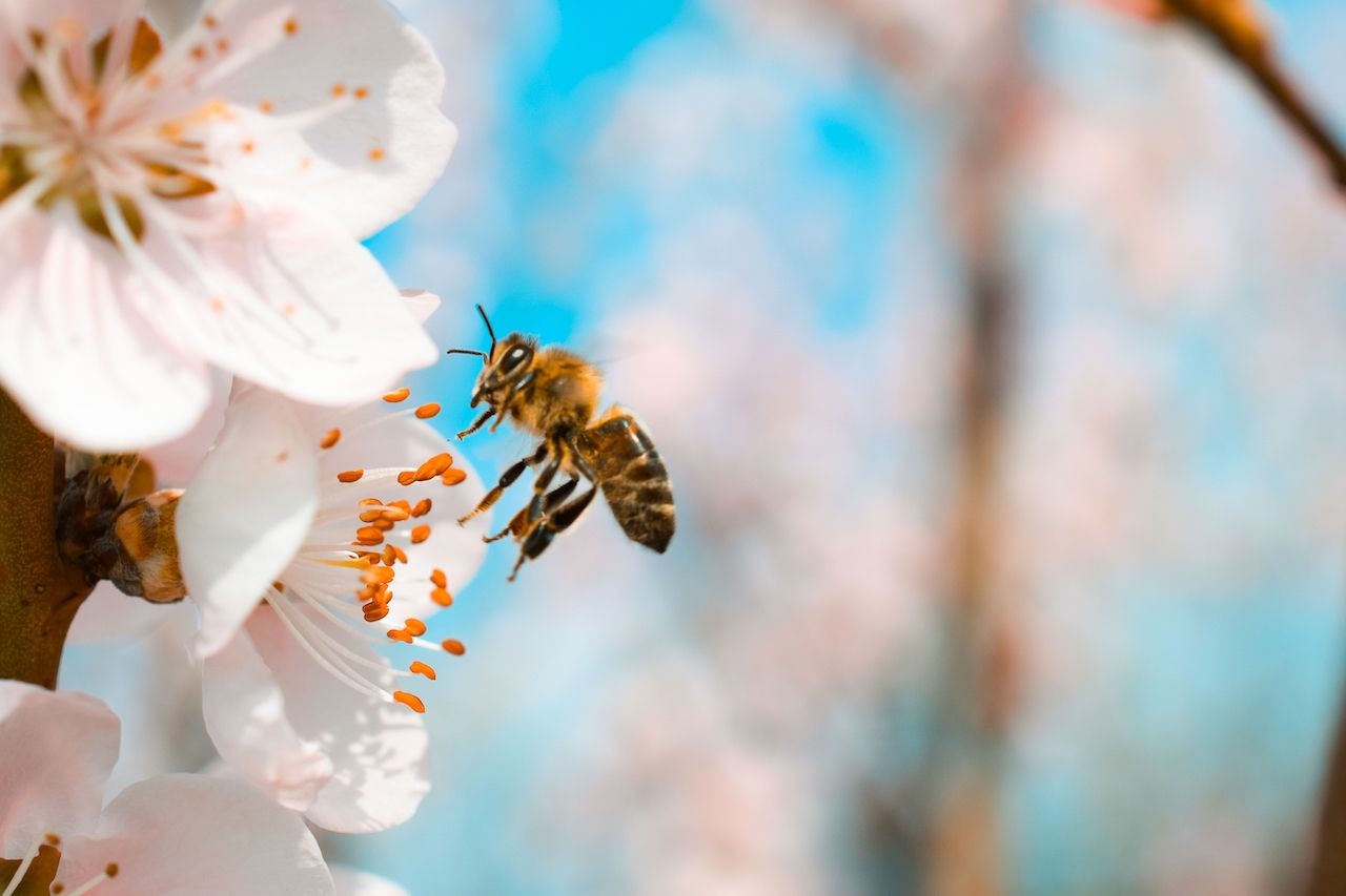 How to help save the bees in the US