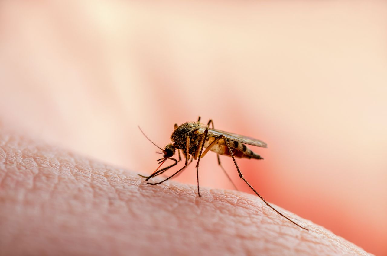 Newly found microbe prevents malaria