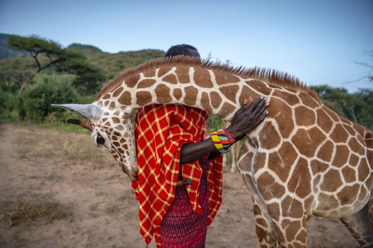Las fotos ganadoras del Concurso de Fotografía BigPicture Natural World 2020 te dejarán sin aliento