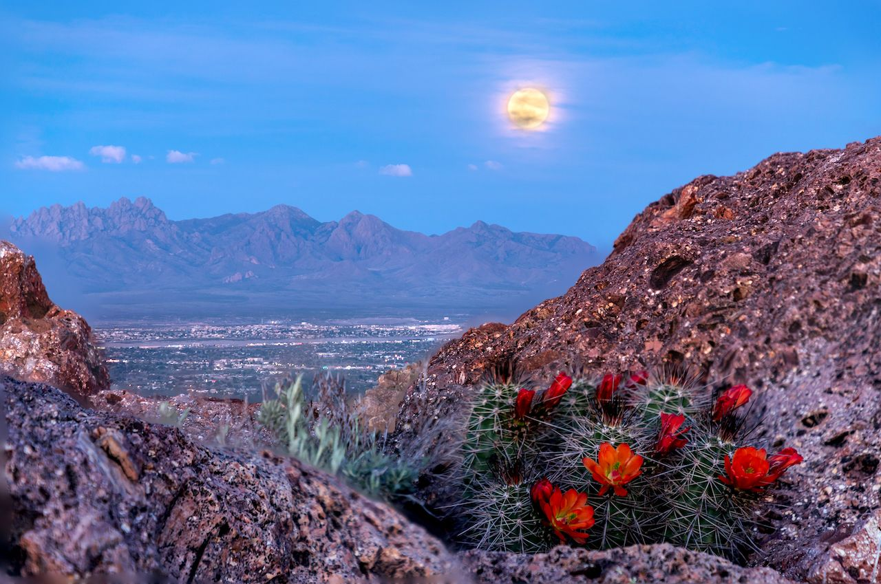 Best things to do in Las Cruces, NM