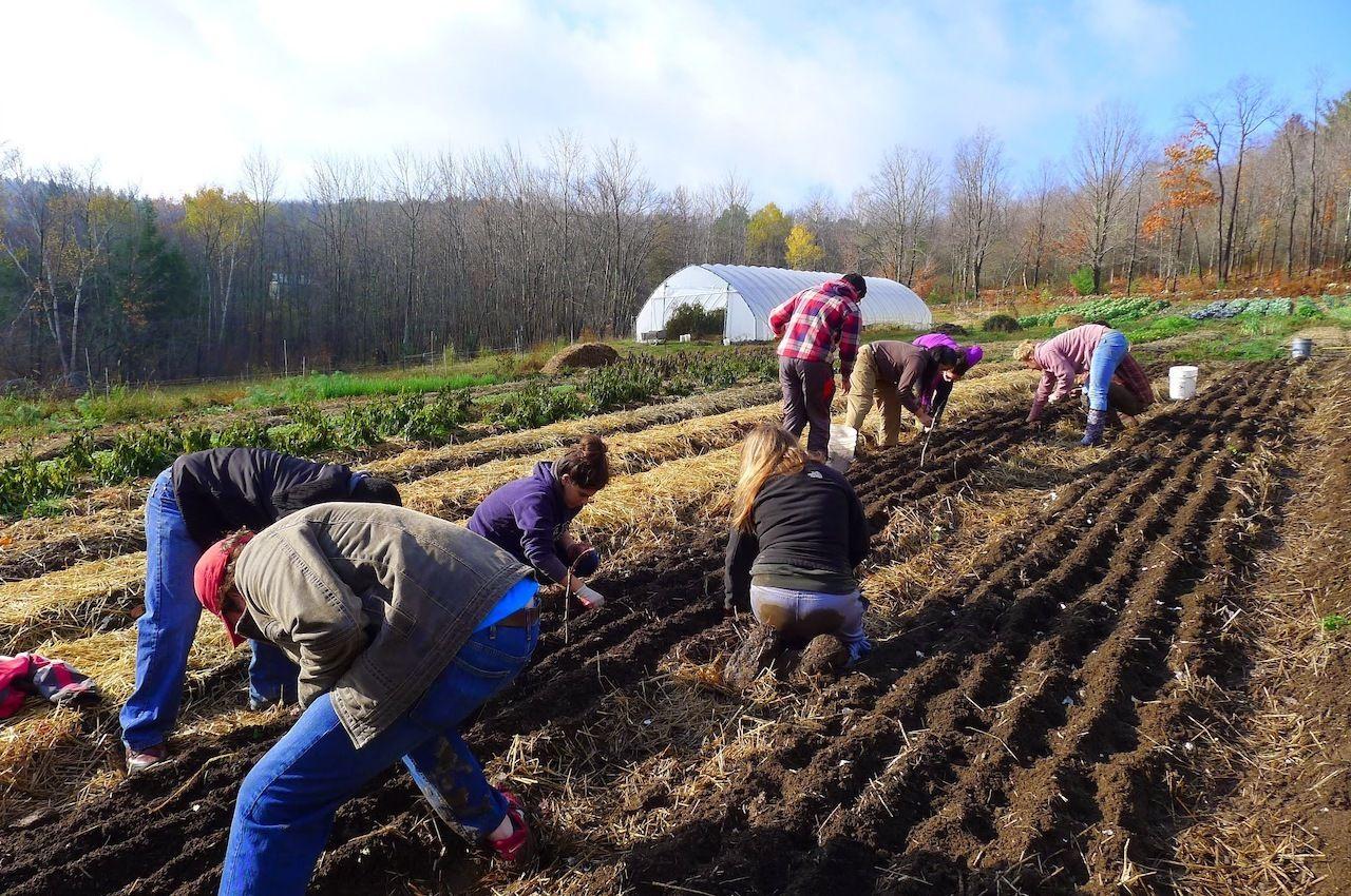 planting-soul-fire-farm
