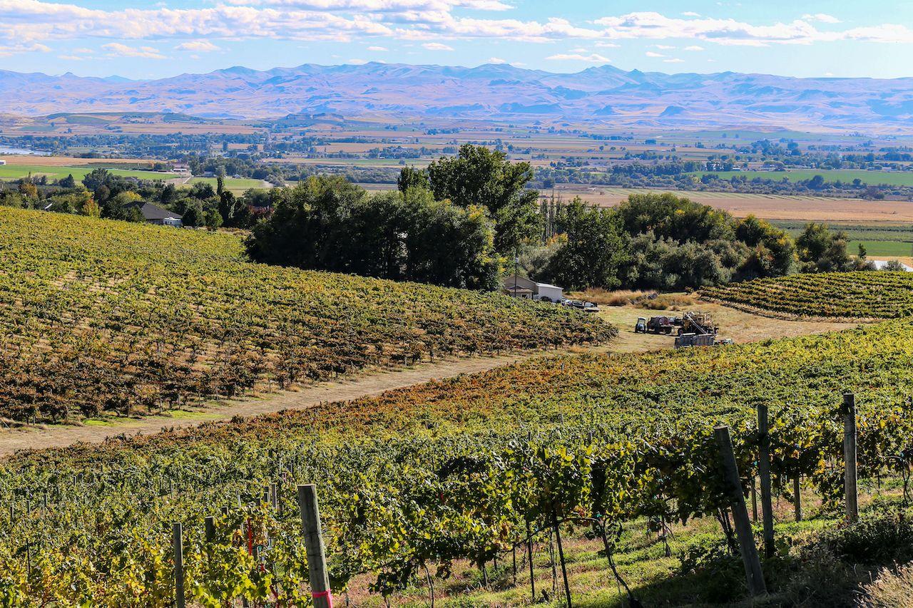 overshadowed wine regions