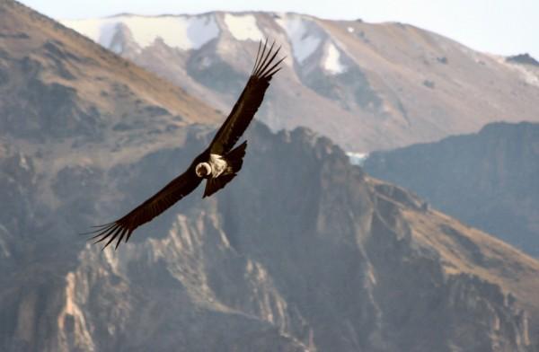 Puedes observar pájaros volar desde un horizonte a otro sin que batan sus alas.