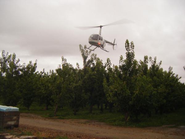 La mejor manera de mantener las cerezas frescas y secas... un helicóptero.