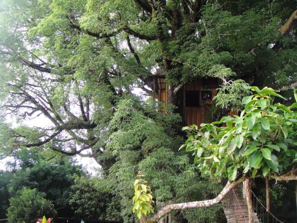 27 casita en el árbol