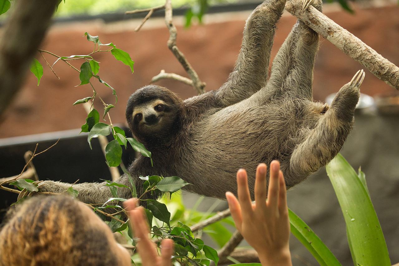8. Centro de rescate de fauna silvestre de Gamboa