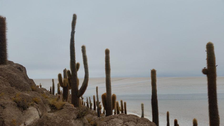 Isla del Pescado, por Fran Norera