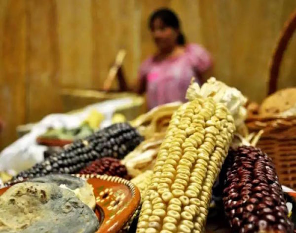 Cuando Quetzalcoatl le regaló el maíz a la humanidad