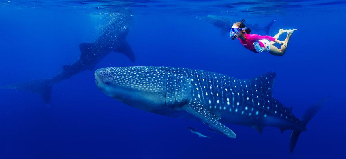 cosas para hacer antes de morir nadar con tiburones ballena