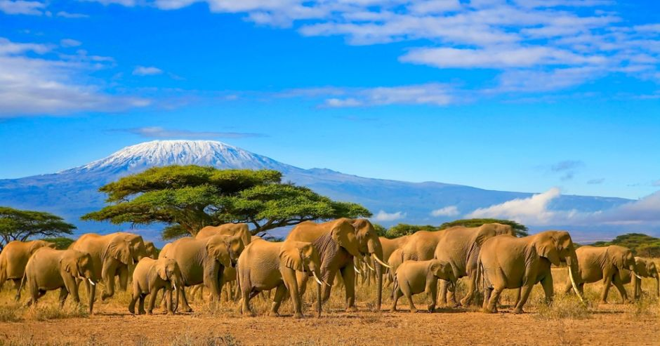 África elefantes Kilimanjaro