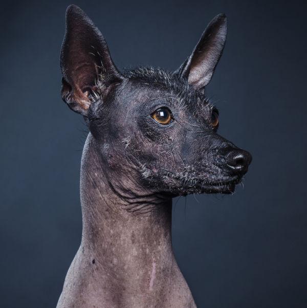 perros mexica prehispánicos