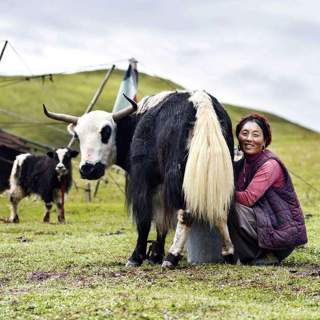 Kham Tibet 2012