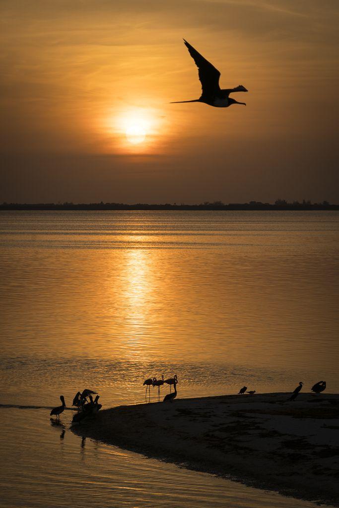 Holbox Isla de las Aves