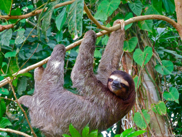 majestuosos animales de Costa Rica