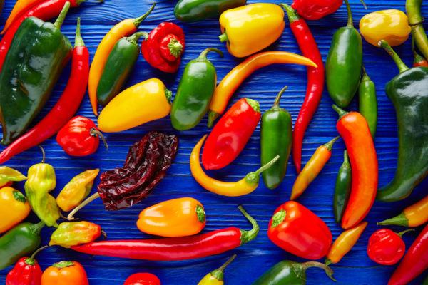 primer salsaton chiles más usados en la cocina mexicana