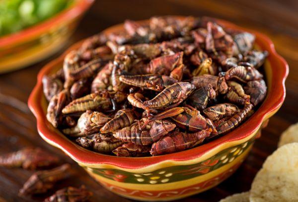 Dónde comer insectos en la Ciudad de México