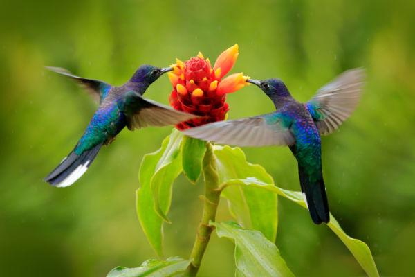 significado del colibrí en México prehispánico