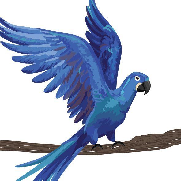 spix macaw guacamayo azul Blu Río