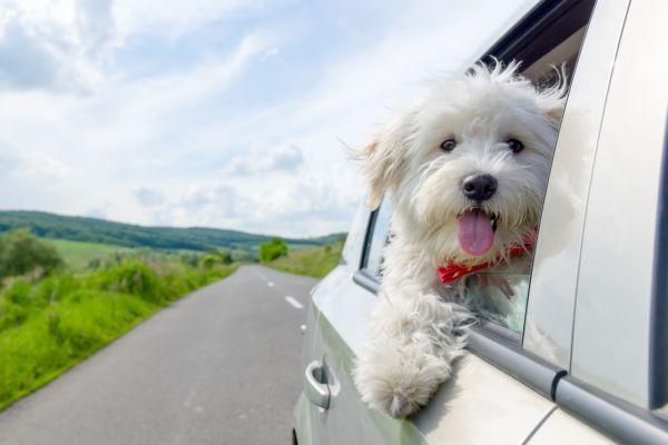 viajar con perros en México